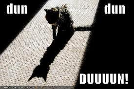 cat dun